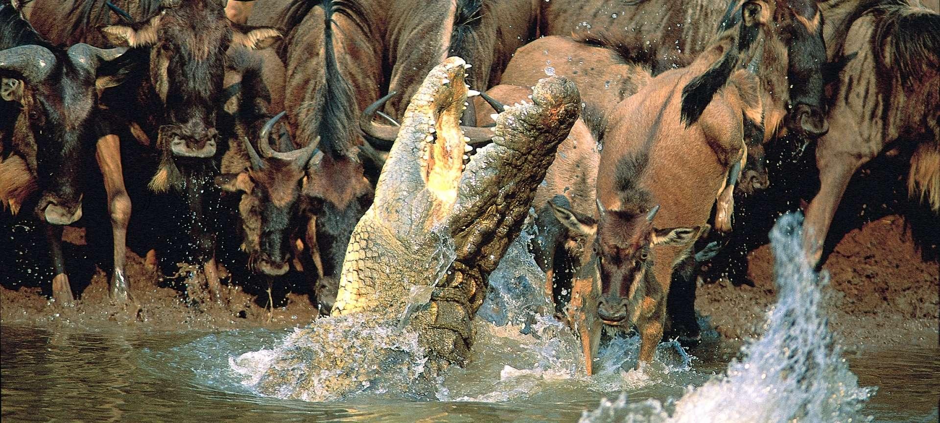 f01054d1bb2d Let SafariBando organize your safari in Tanzania