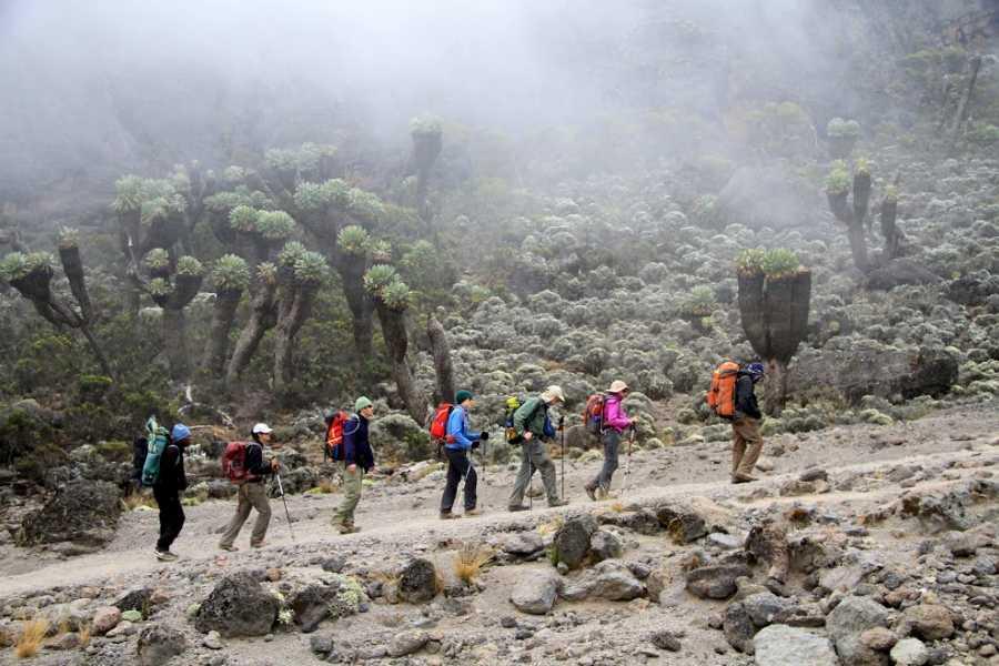 6 Days Marangu Route Kilimanjaro Climb,  Mount Kilimanjaro, Tanzania