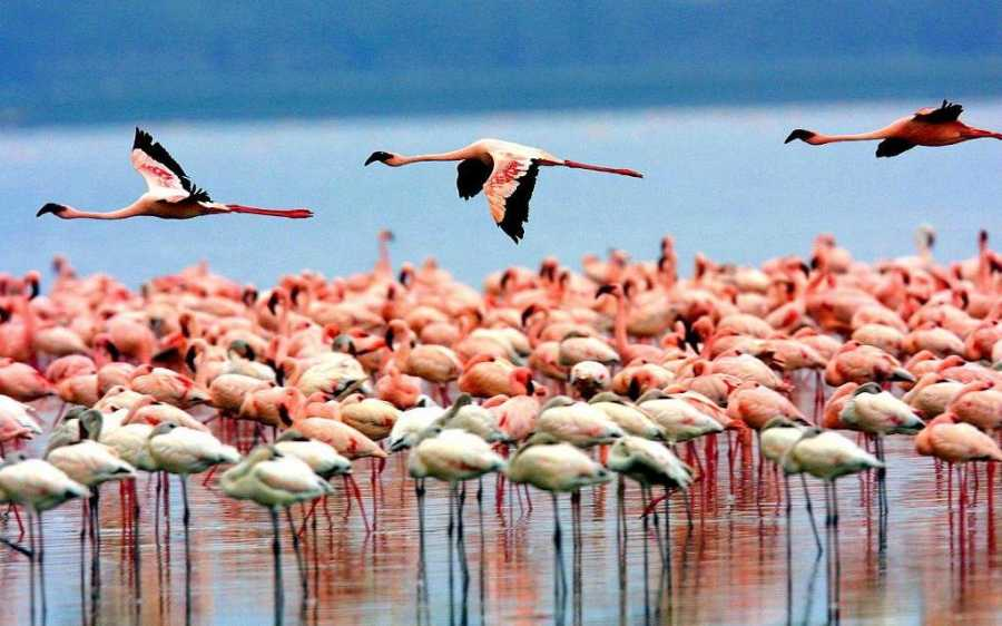 Join a Group for 4 Day Tanzania Lodge Safari