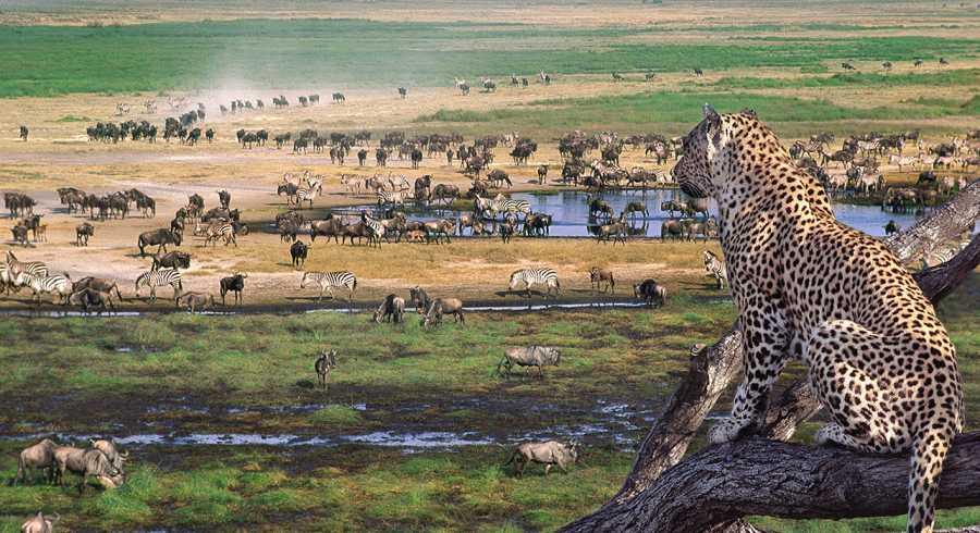 Tanzania 7 Days Safari